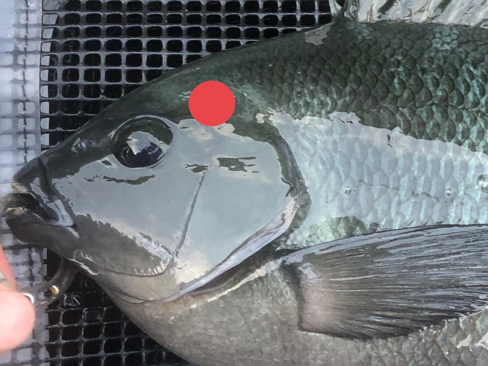 締め 方 魚